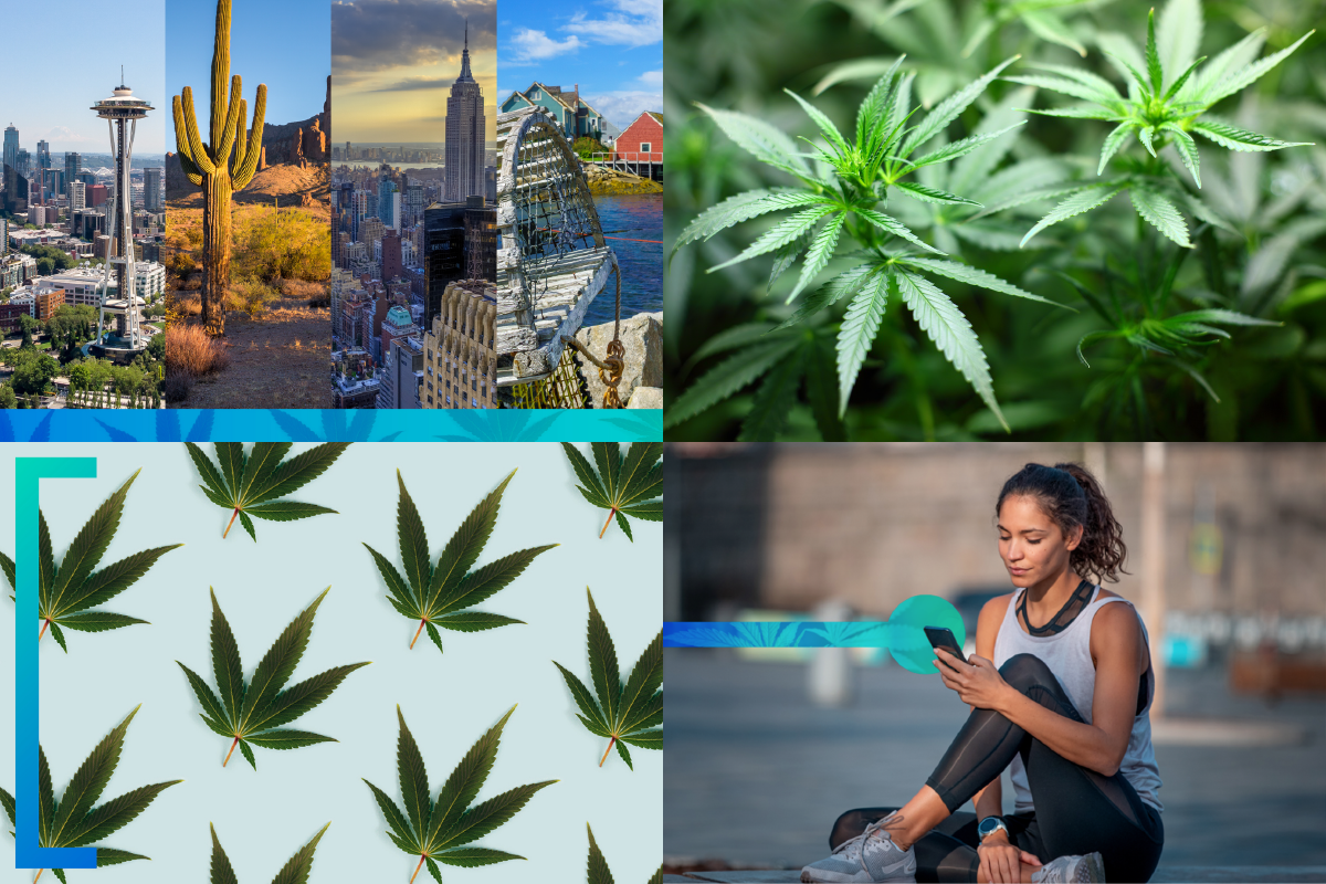 A Round-Up of Cannabis Resources to Help Your Business Grow