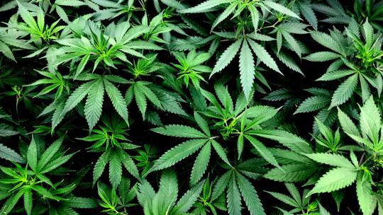 Five Key Marketing Initiatives for Cannabis Dispensary Marketing