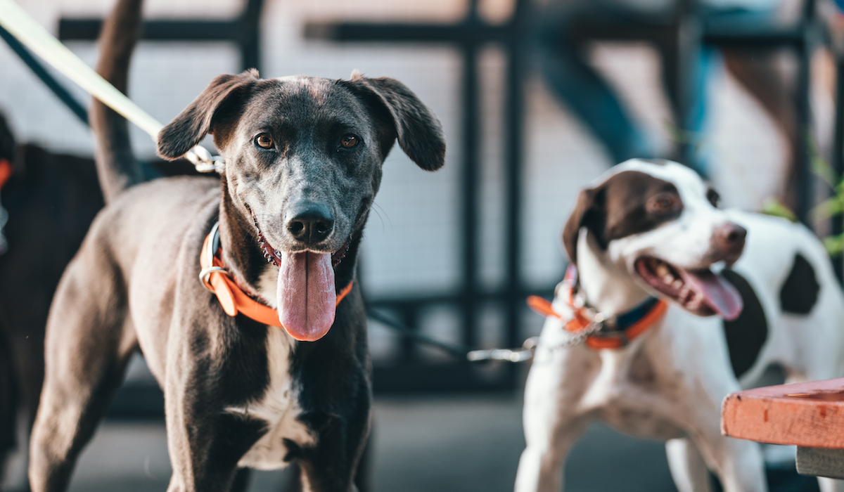 CBD Pet Product Advertising: Challenges, Misconceptions & Tips